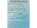 MEGUIARS AIR REFRESHER, NEW CAR 59 ml